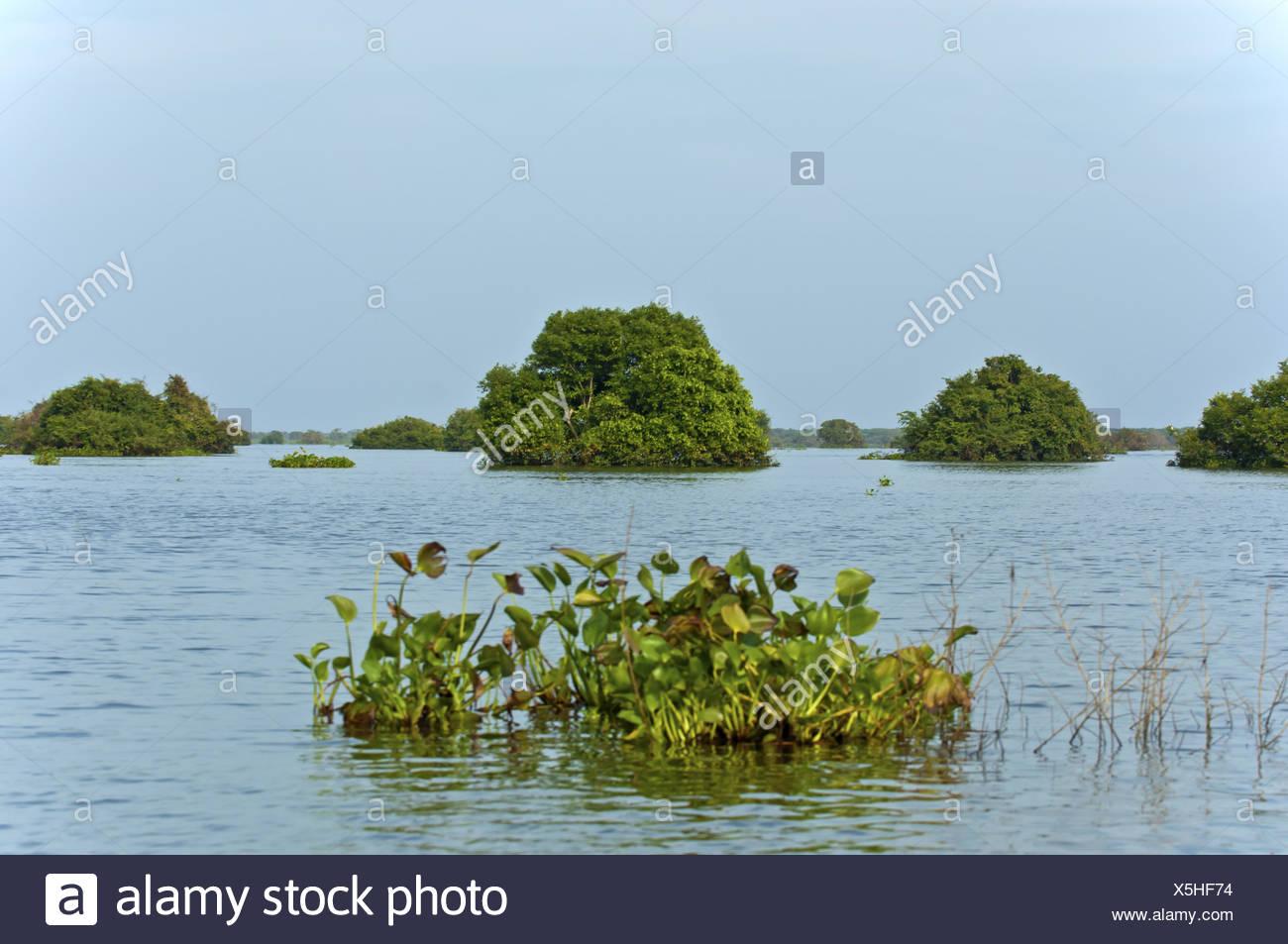 Flooded areas at Tonle Sap lake, Cambodia Stock Photo