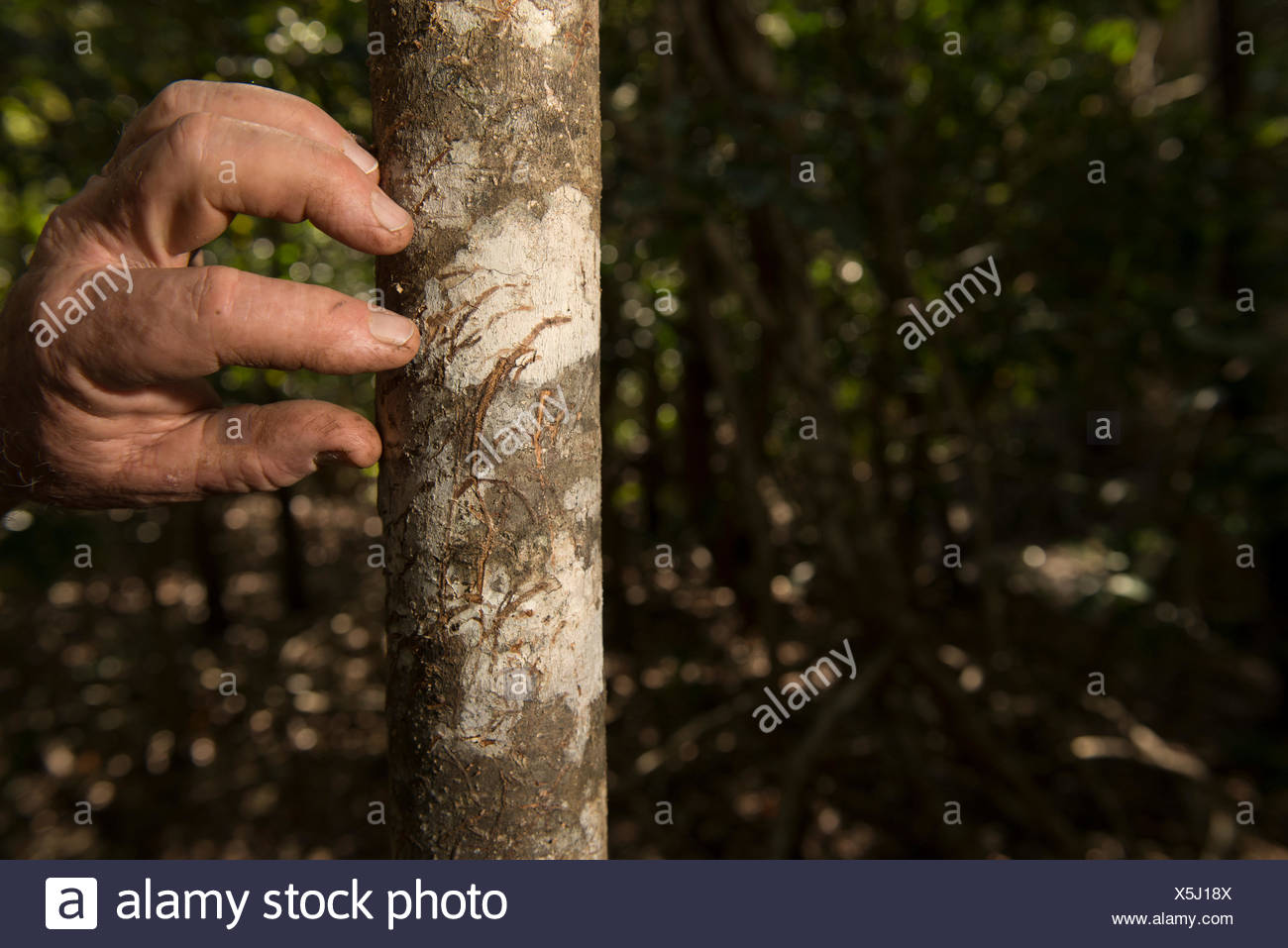 Claw Marks Stock Photos & Claw Marks Stock Images - Alamy