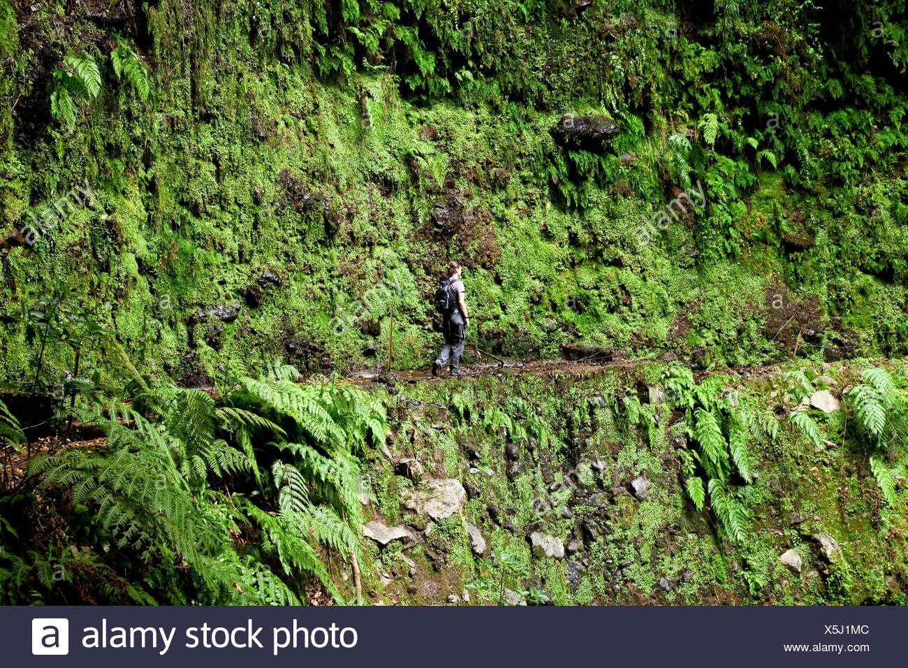 Woman hiking near the Levada de Janela irrigation canal, near Ribeira da Janela, Madeira, Portugal, Europe Stock Photo