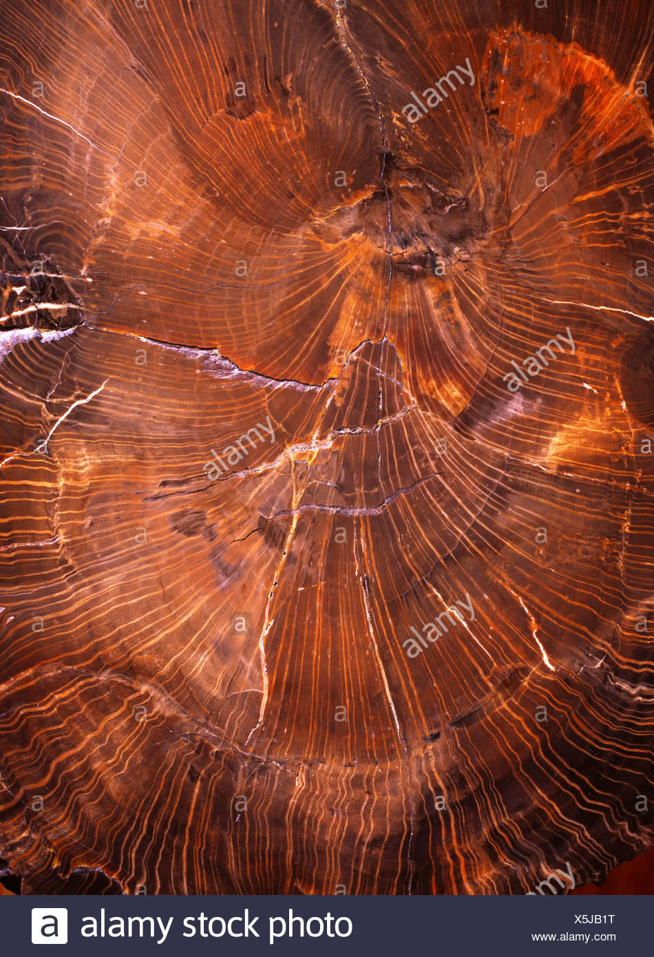 Polished Petrified wood Petrified Forest National Park Arizona. - Stock Image