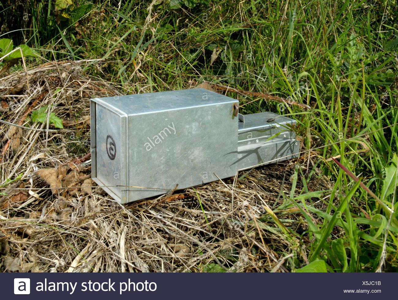 Longworth Trap - Stock Image