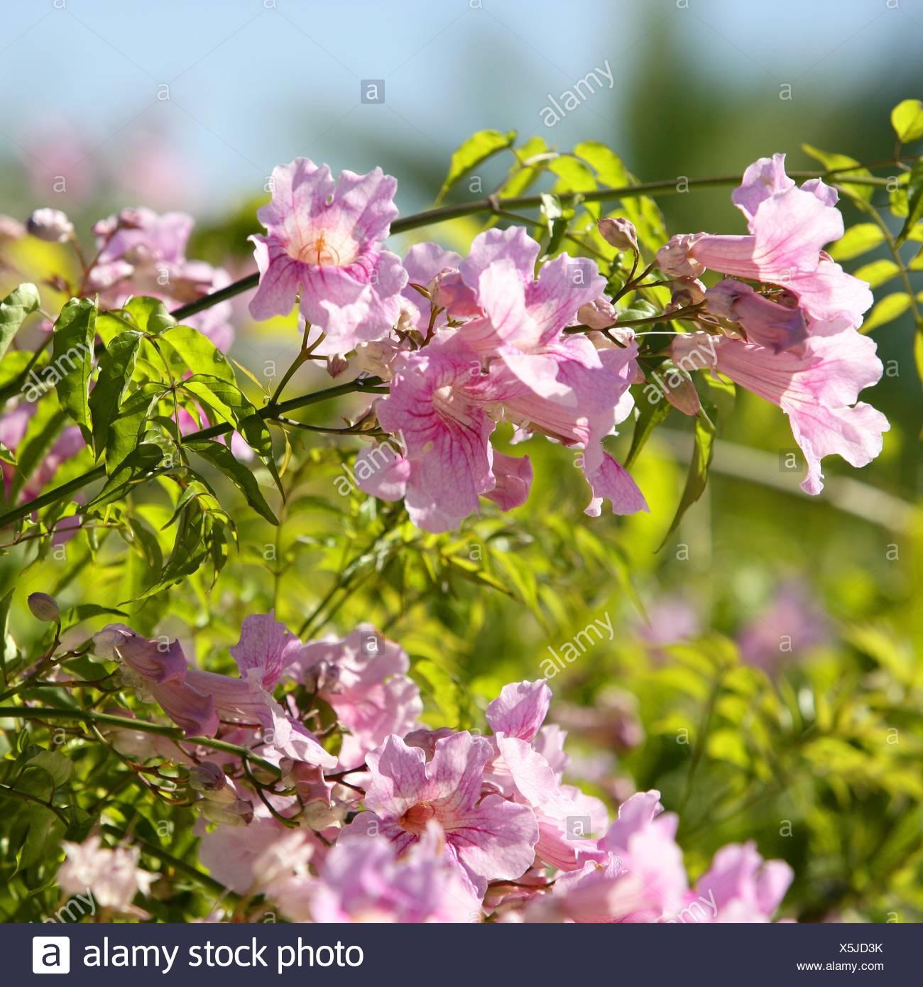 Flower plant flowers water mediterranean salt water sea ocean flower plant flowers water mediterranean salt water sea ocean pink mightylinksfo