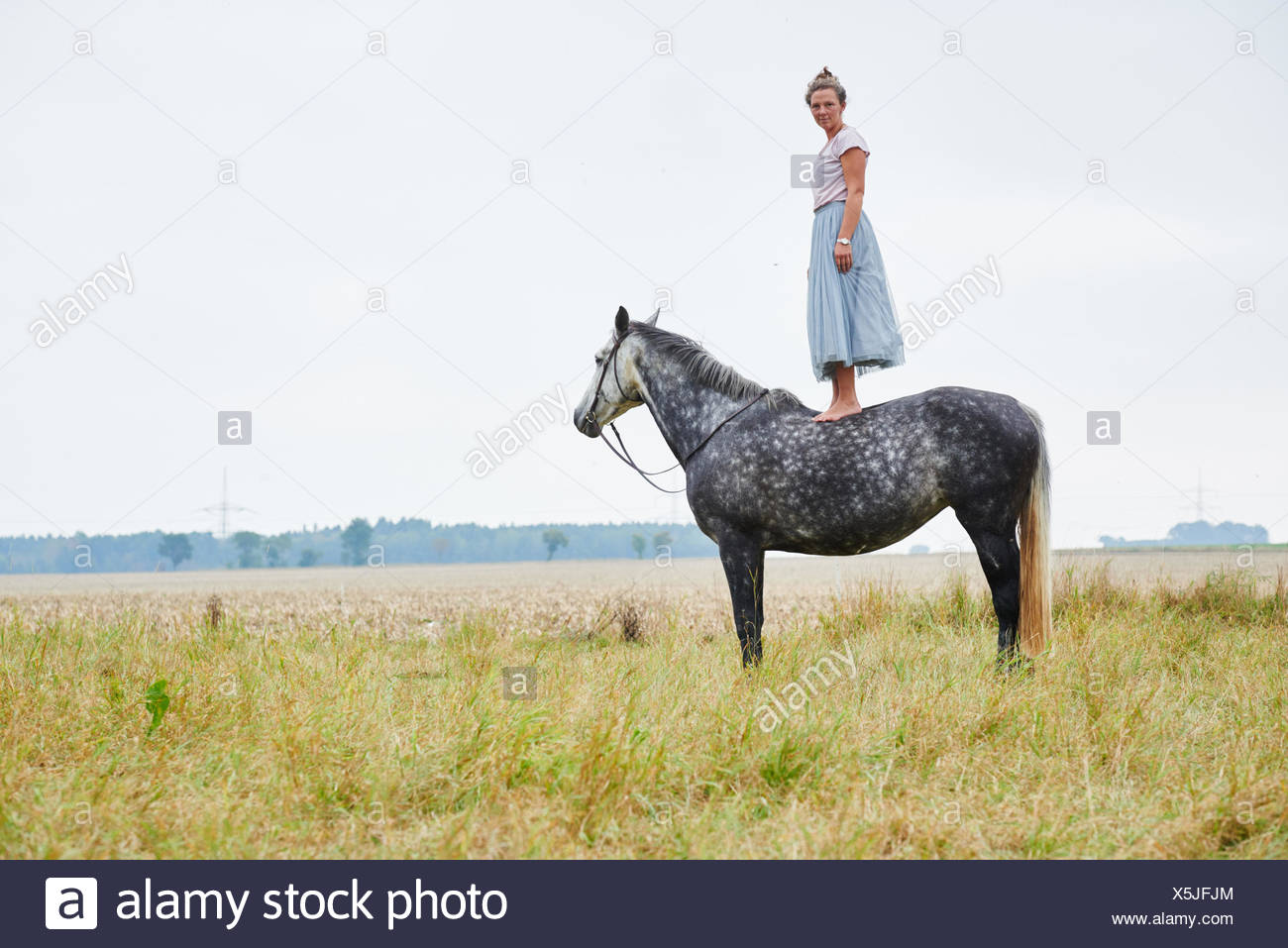 Woman in skirt standing on top of dapple grey horse in field - Stock Image