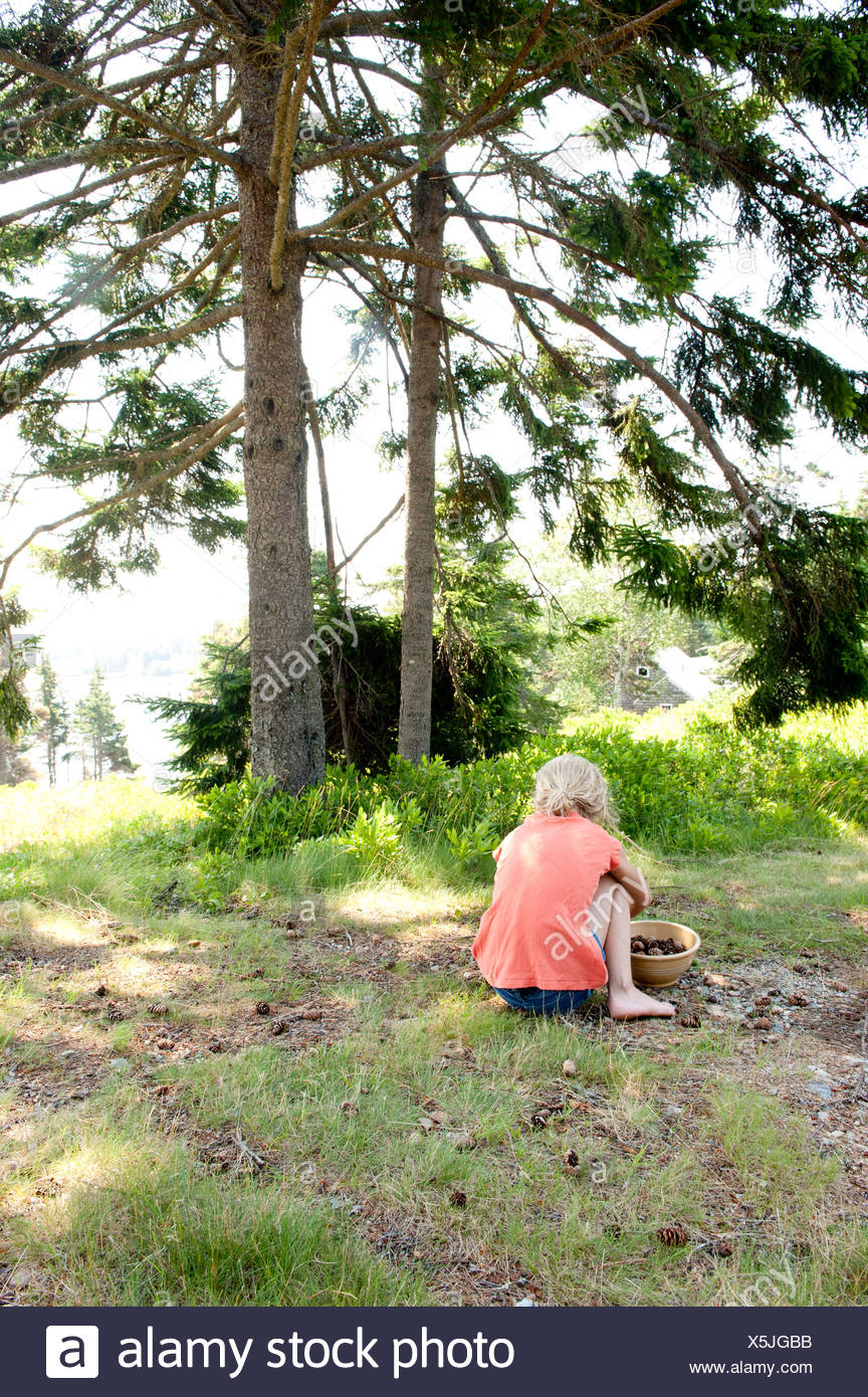 a girl collects pine cones on the coast of maine - Stock Image