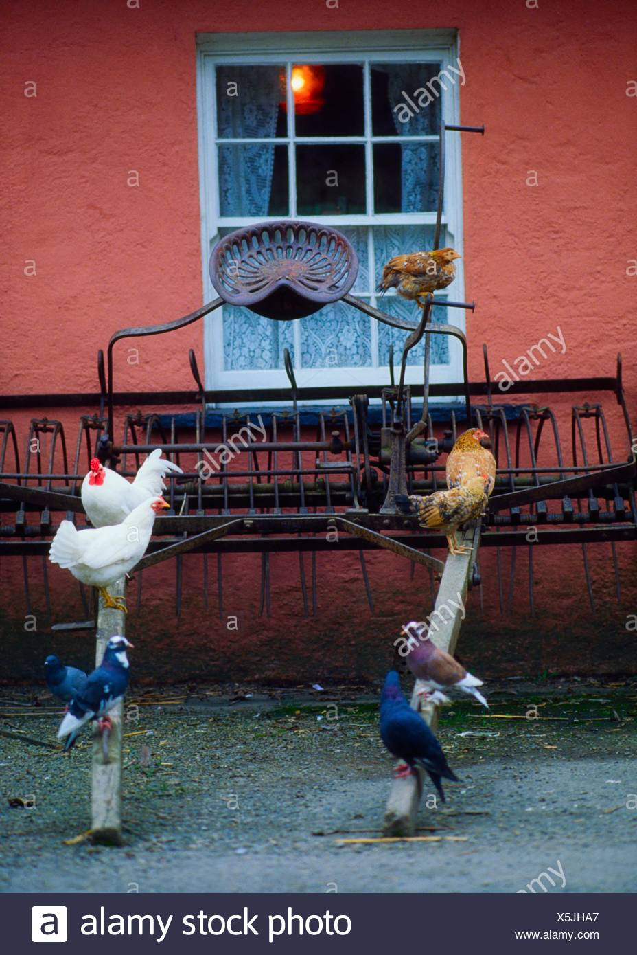 Bunratty Castle And Folk Park, Co Clare, Ireland; Chickens In A Folk Park Recreating 19Th Century Life Stock Photo