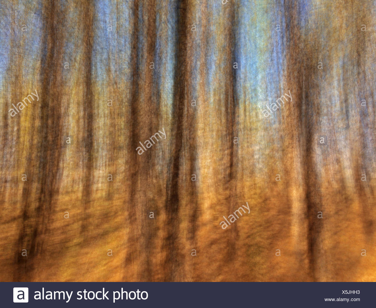 Motion study of coniferous forest, Birds Hill Provincial Park, Manitoba, Canada - Stock Image