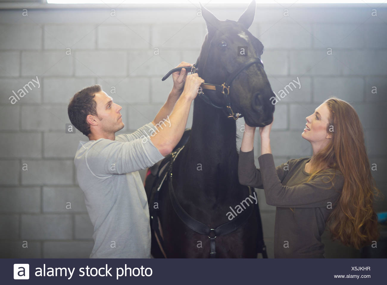 Male and female stablehands putting bridle onto horse in stables Stock Photo