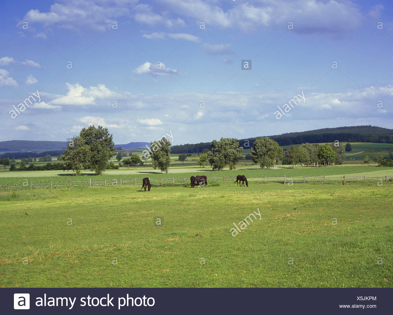 Germany, Bavaria, Central Franconia, white castle, scenery, pasture, horses, francs, agriculture, civilised country, fields, spring, heaven, clouds, deserted, animals, horse's pasture, belt, - Stock Image