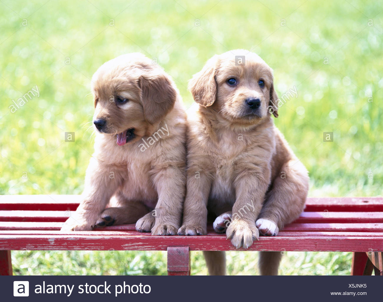 Hybrid Dogs Puppies High Resolution Stock Photography And Images Alamy