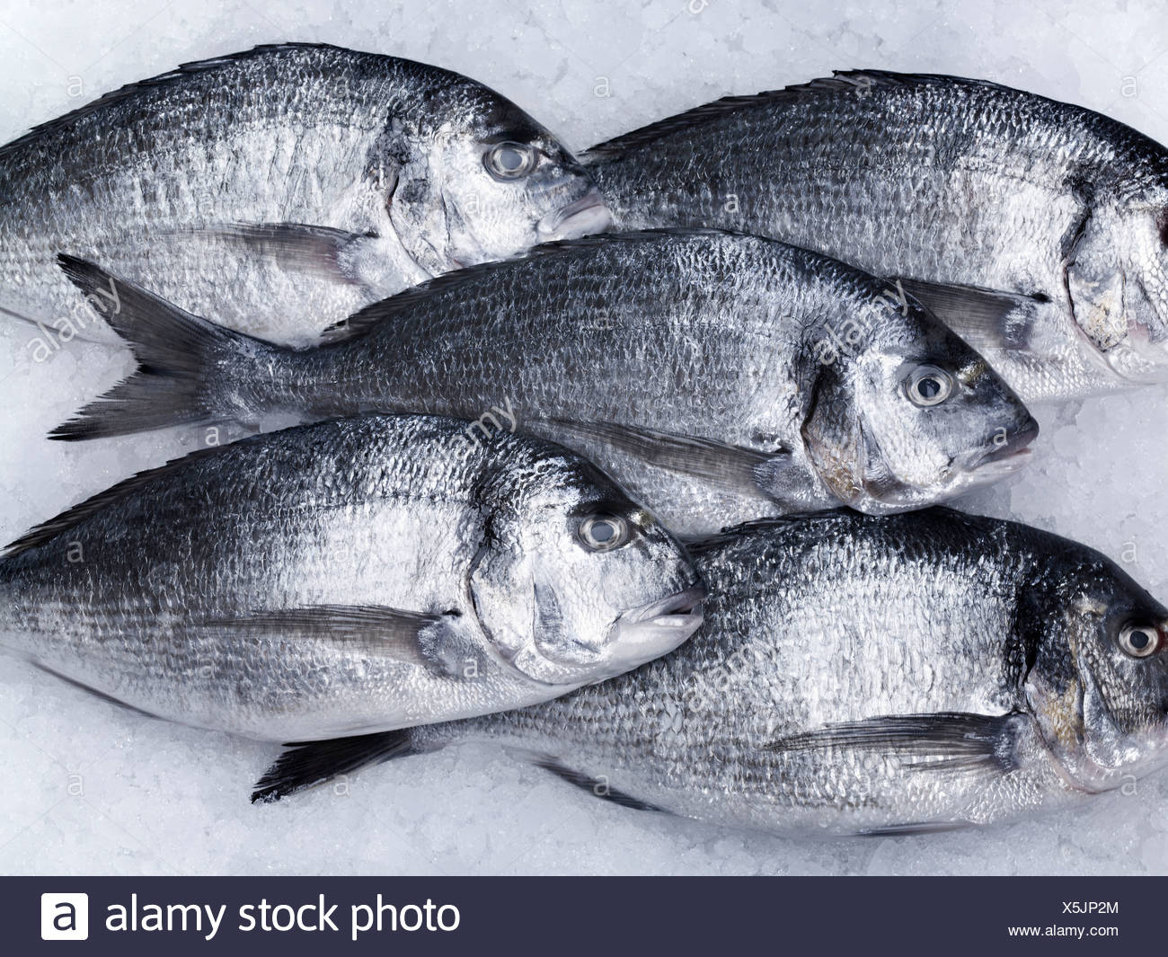 animals,close up,color image,cooling,dead fish,fish,fish on ice,five animals,five objects,formation,fresh,healthy eating,high - Stock Image