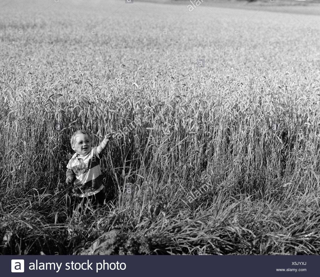 Boy playing in wheat field - Stock Image