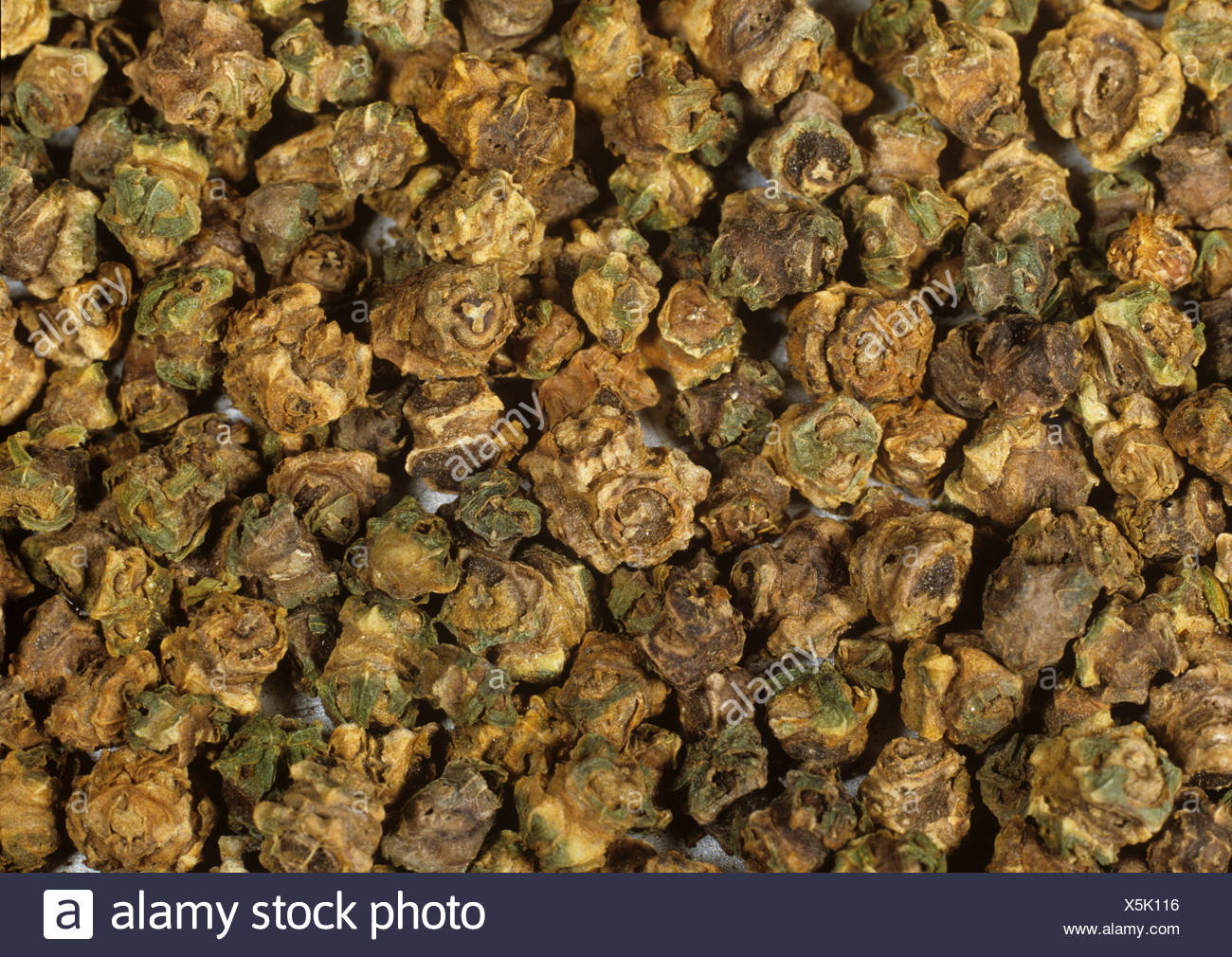 Sugar beet crop seed - Stock Image