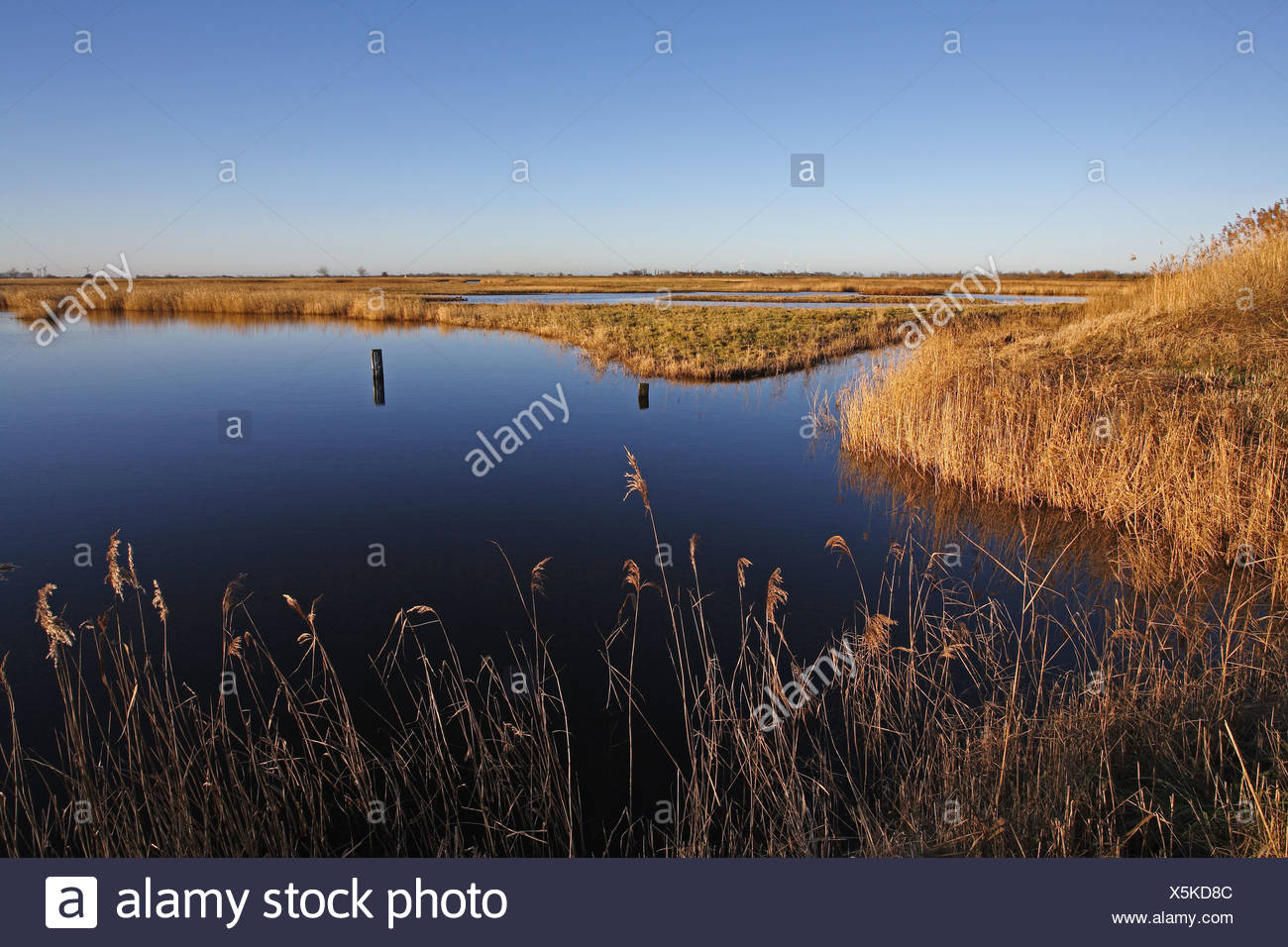 waterfowl reservation, Fehmarn island, Germany - Stock Image
