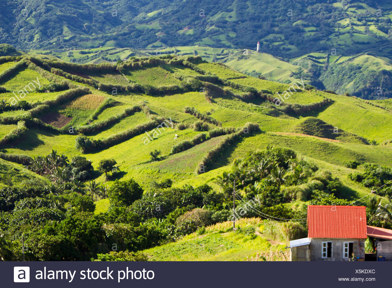 Hedge rows separate farmers' fields in a hilly landscape. - Stock Image