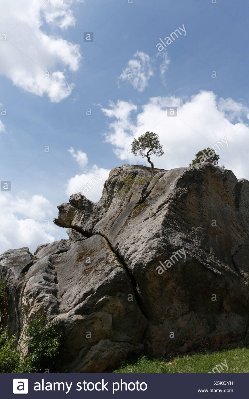 Rocks from the Late Triassic period with a pine tree in Altenstein, Hass Mountains, Lower Franconia, Bavaria, Germany, Europe - Stock Image