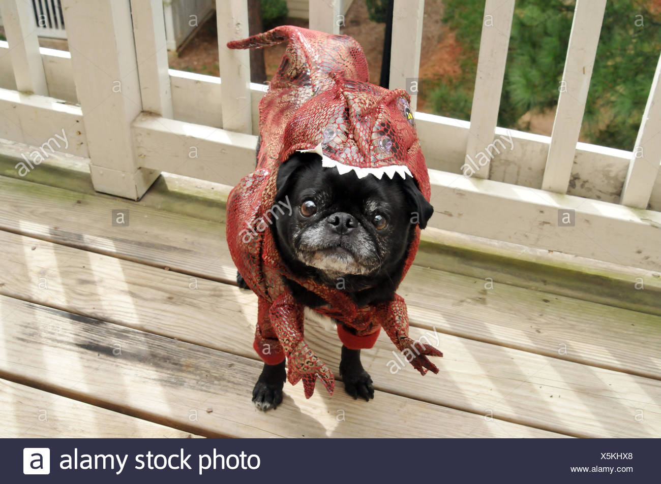 View of dog in costume - Stock Image & Dog In Costume Stock Photos u0026 Dog In Costume Stock Images - Alamy