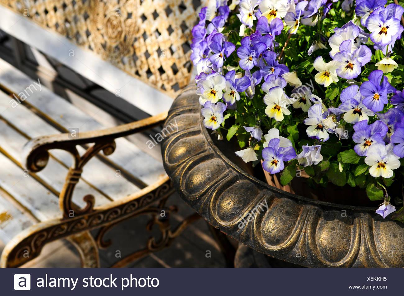 Groovy Garden Flower Flowers Plant Purple Seat Bench Blooming Park Machost Co Dining Chair Design Ideas Machostcouk