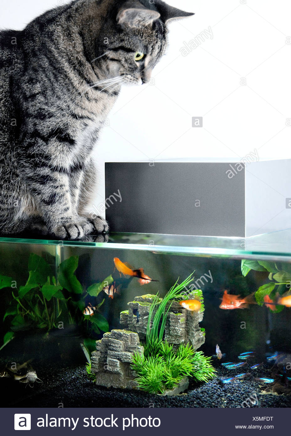 Cat sitting on aquarium - Stock Image