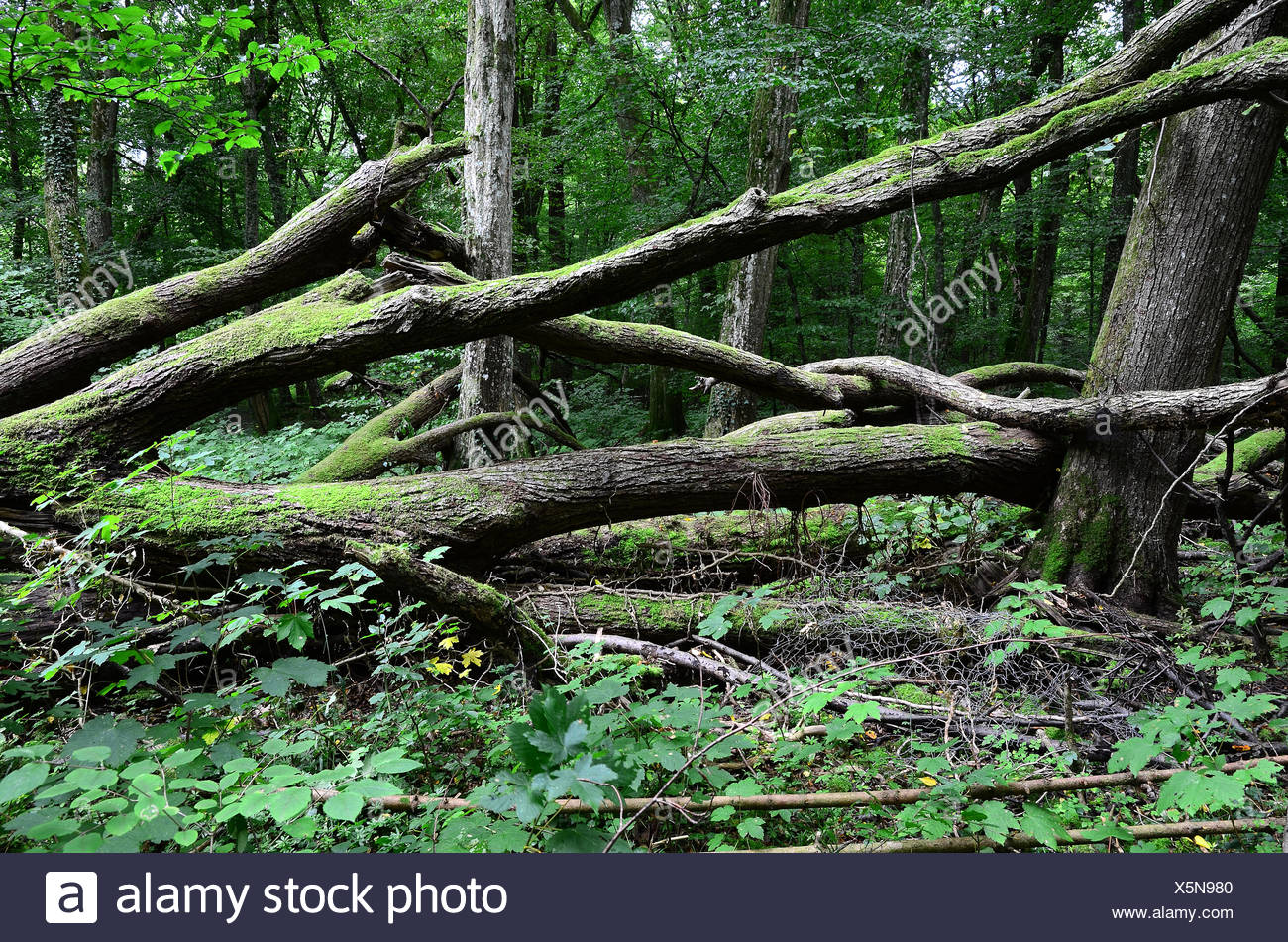 woods, forest, jungle, trees, Stock Photo