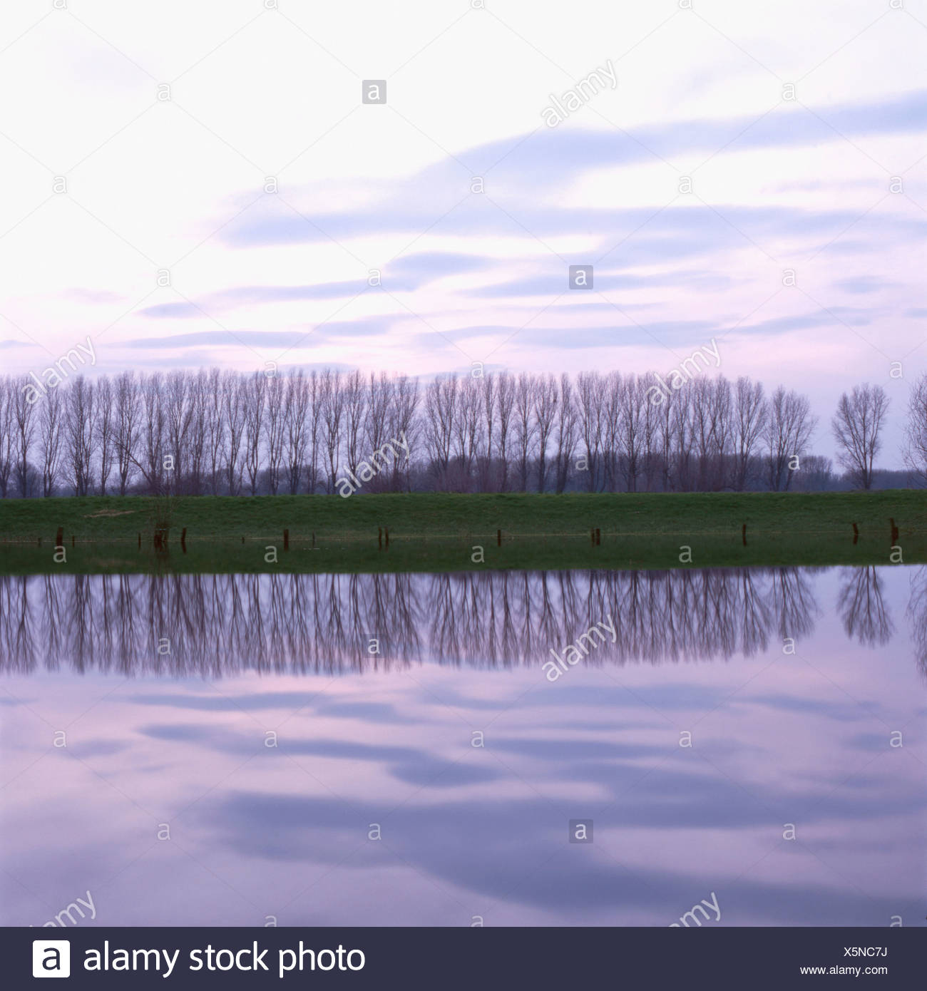 Pastureland near river Rhine in high water, Dusseldorf, North Rhine-Westphalia, Germany - Stock Image