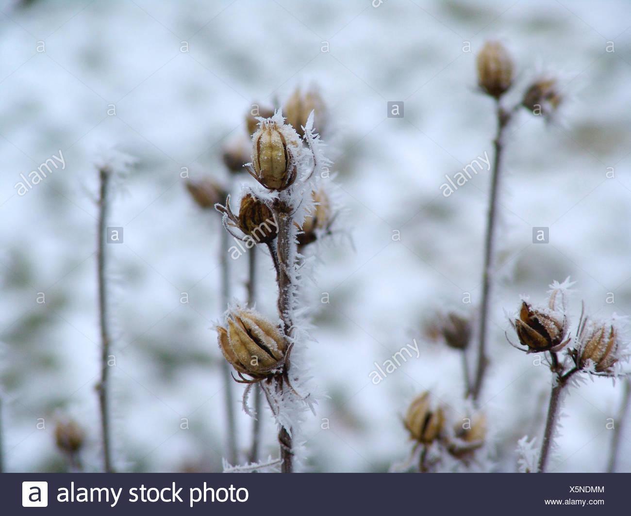 Hibiscus In Winter Stock Photo 278910932 Alamy