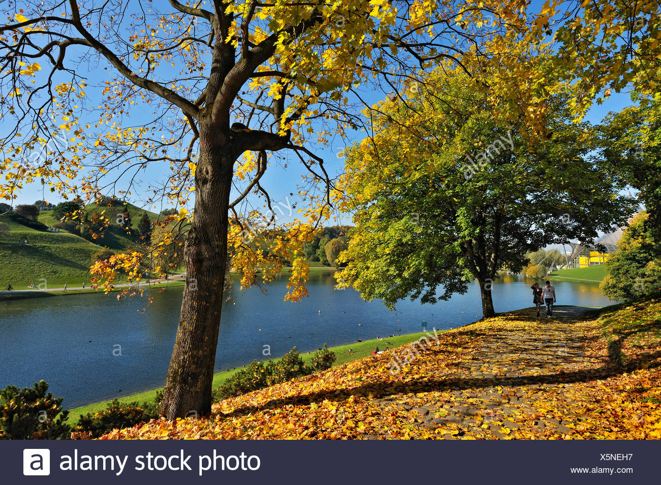 Olympic Park with autumn leaves from a Maple (Acer) and a lake, Munich, Bavaria - Stock Image