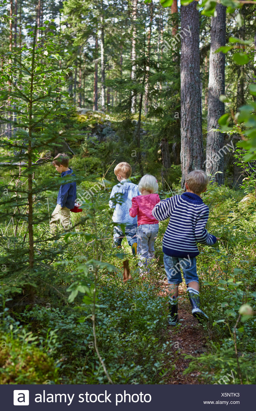 Four young children wandering in forest - Stock Image