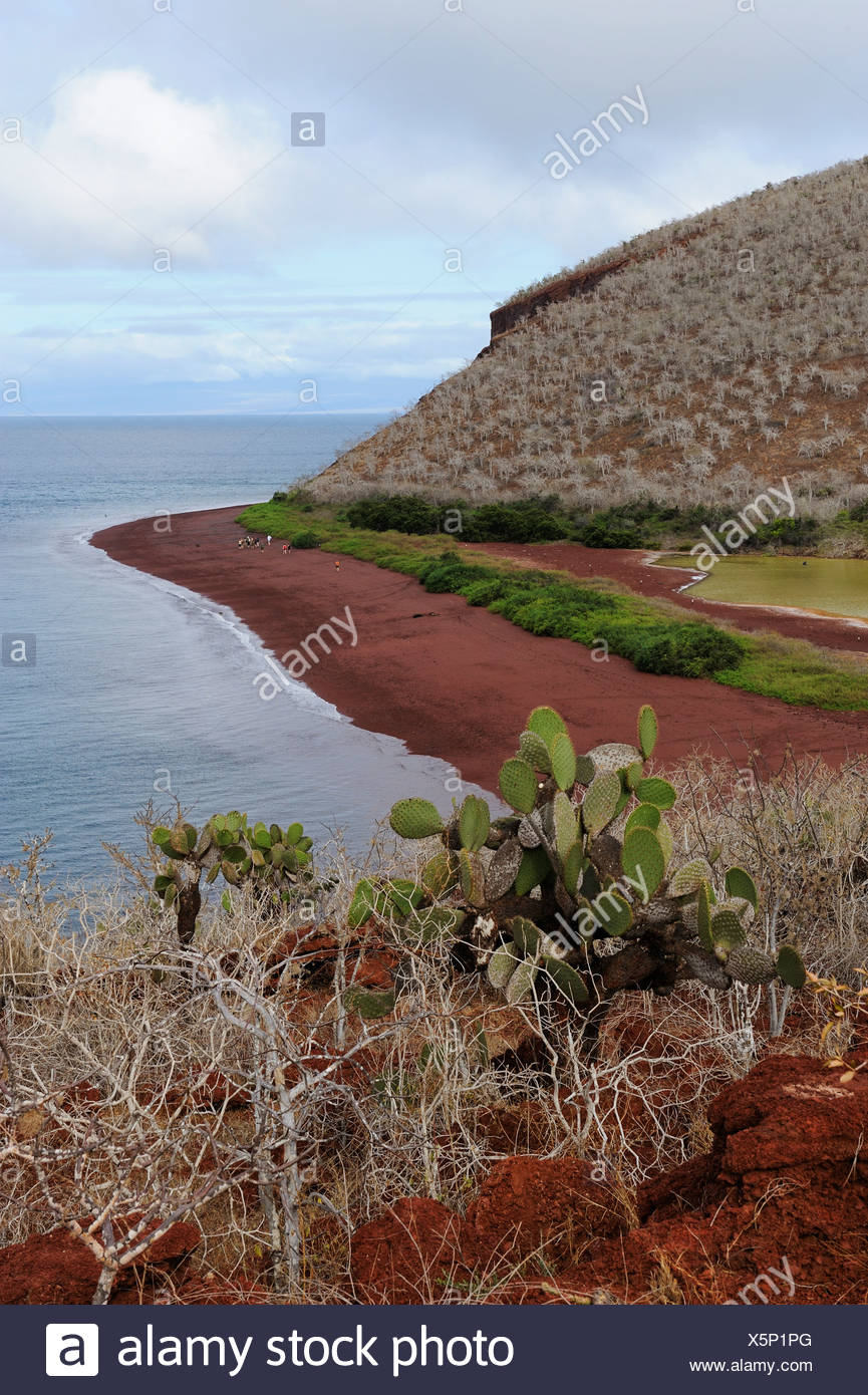 View of the red sand beach of Rabida Island, Galapagos Islands, Ecuador, South America - Stock Image