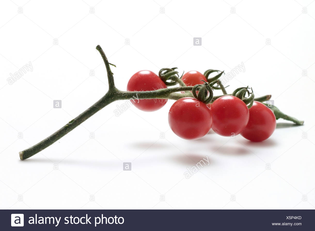 Tomato varieties:  Wild Cherrytomato - Stock Image