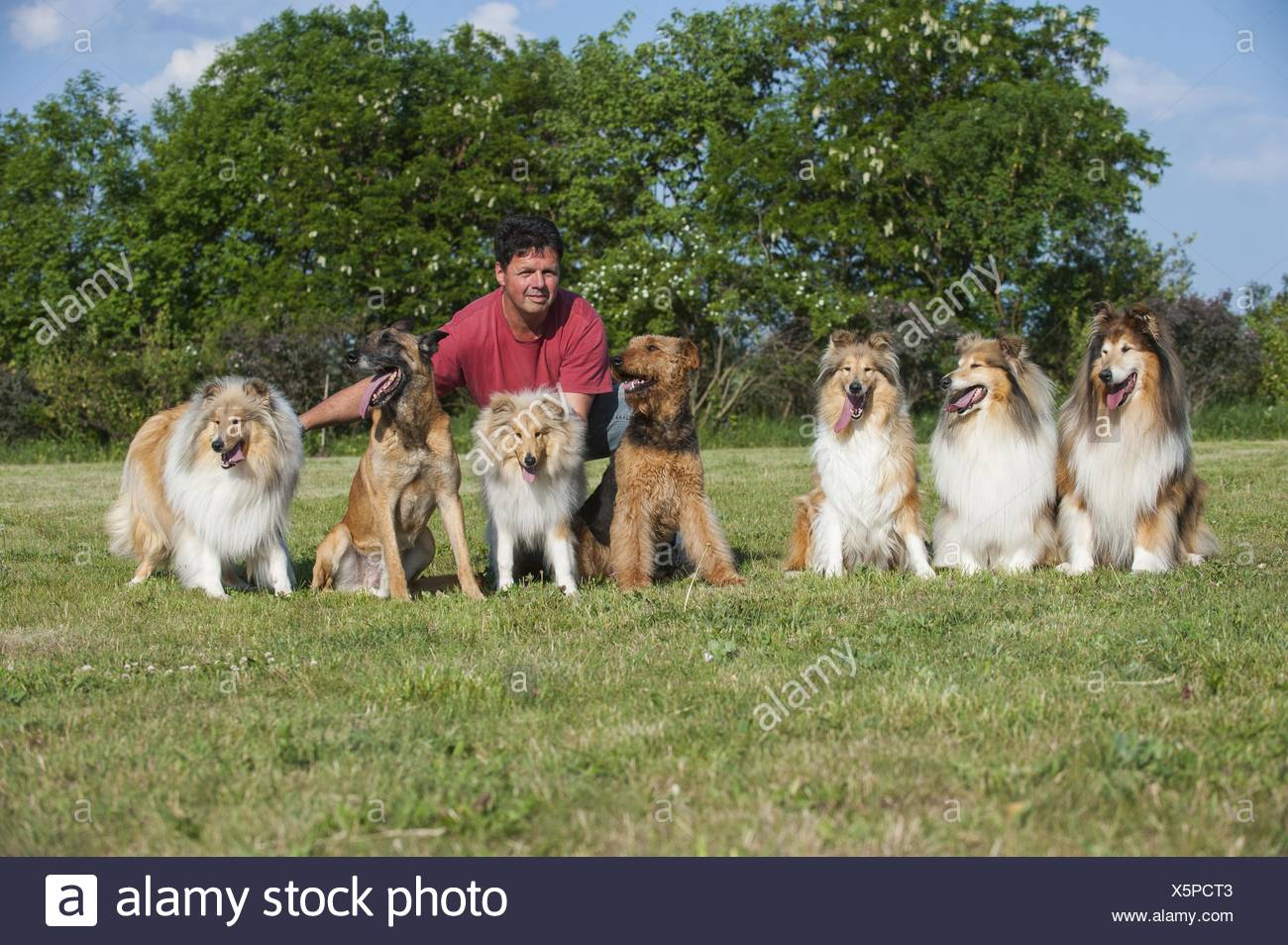 group of dogs - Stock Image