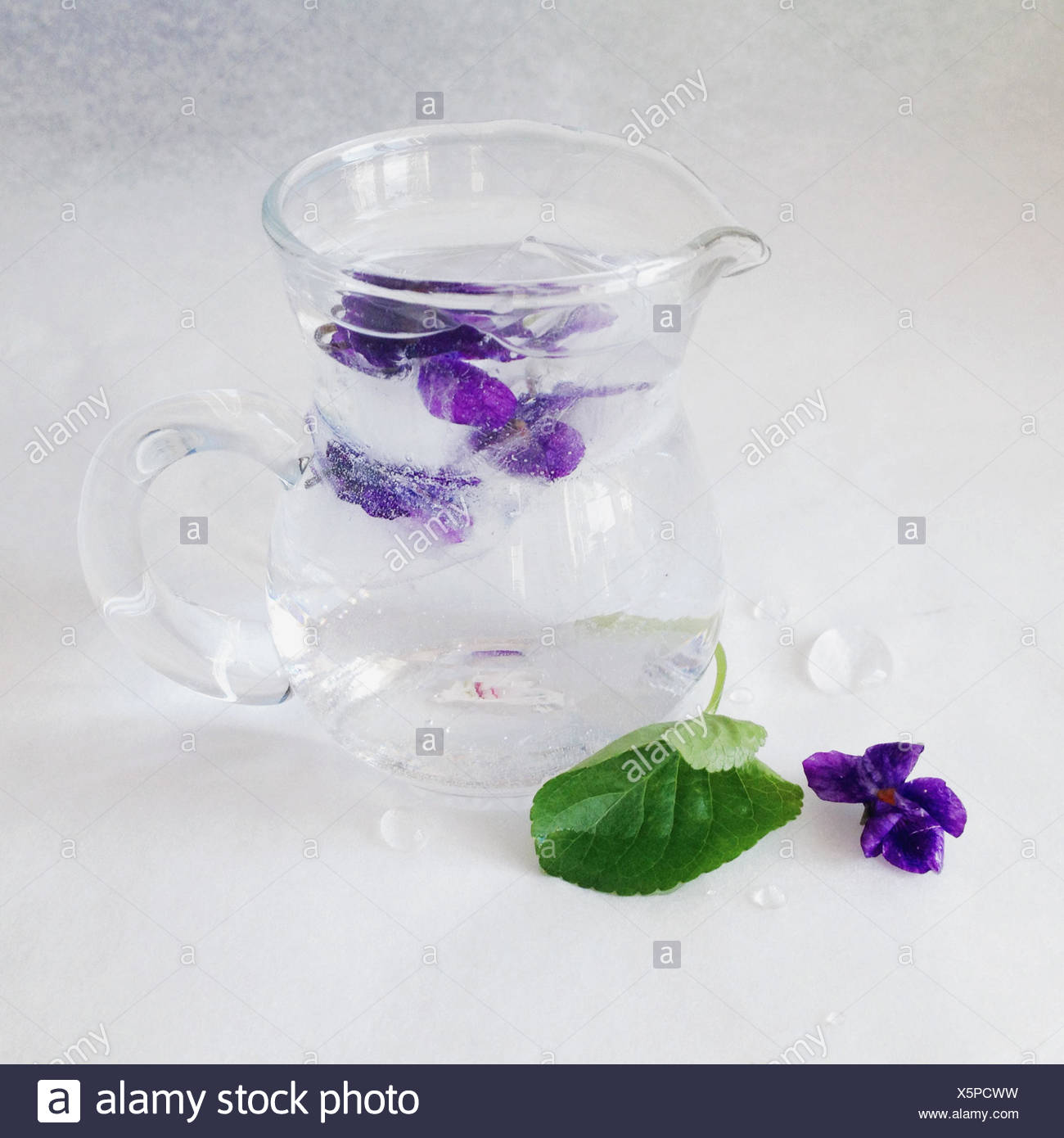 Edible Violet In Ice - Stock Image