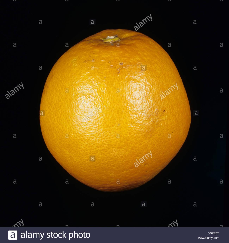 Whole citrus fruit orange variety Pera - Stock Image