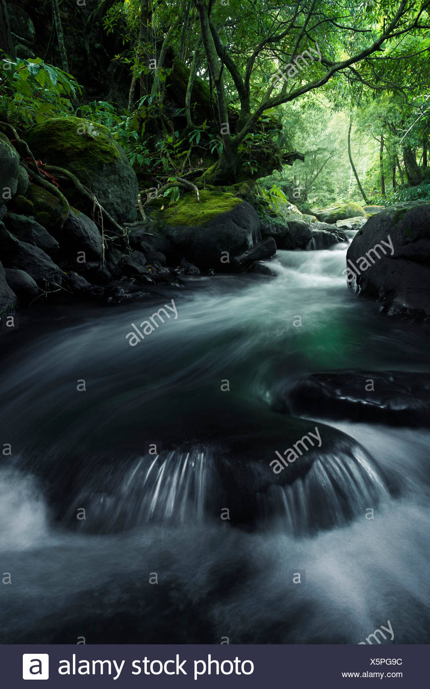 In the jungle on Sao Miguel, the Azores, Portugal - Stock Image