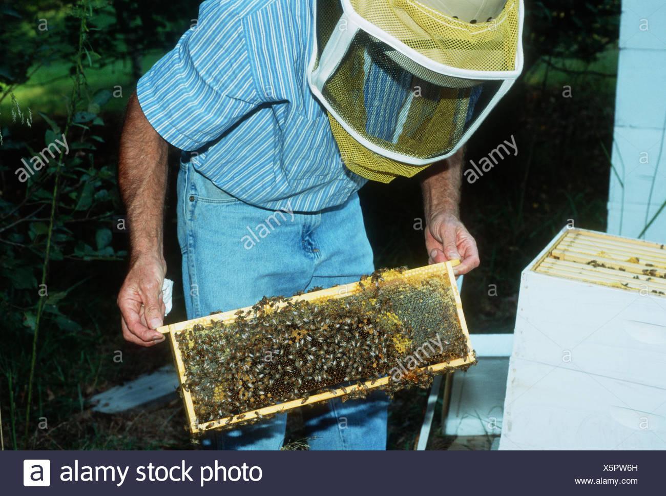 BEE KEEPER STREET SIGN bee hive local honey smoker bee keeper supplies bee