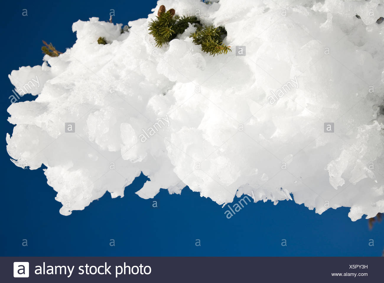 Thick snow on a tree branch - Stock Image
