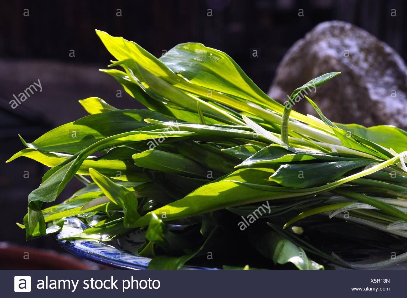 Ramson leafs - Stock Image