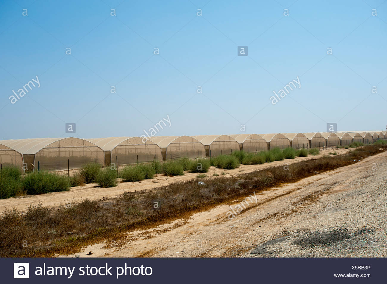 Israel, Aravah Desert Exterior of a tomato greenhouse - Stock Image