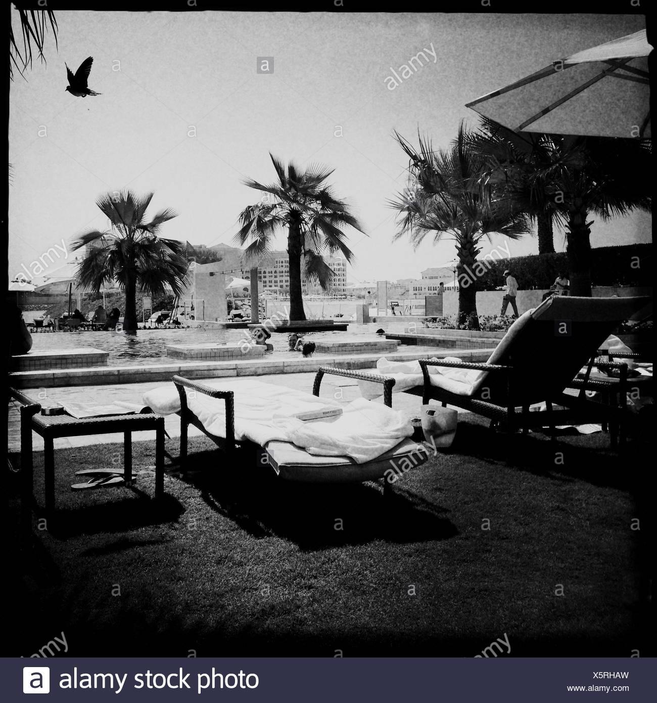 United Arab Emirates, Abu Dhabi, Pool scene with bird - Stock Image