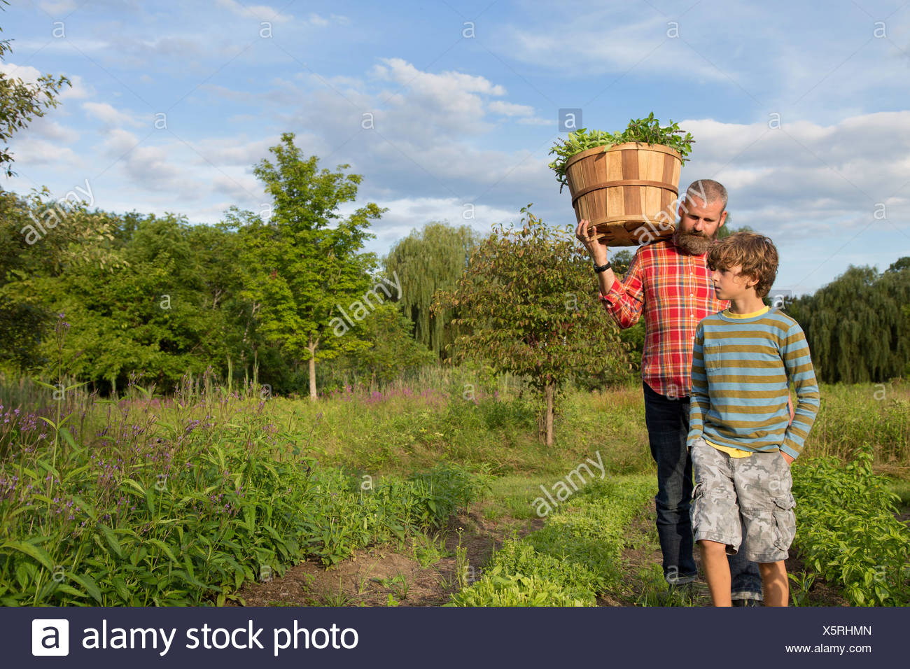 Mature man and son with basket of leaves on herb farm - Stock Image