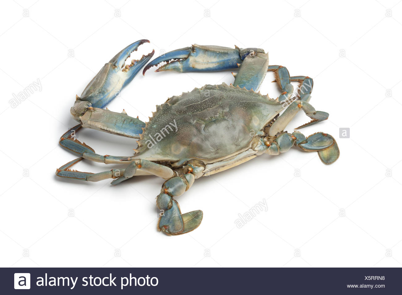 Crabs Cut Out Stock Images & Pictures - Alamy