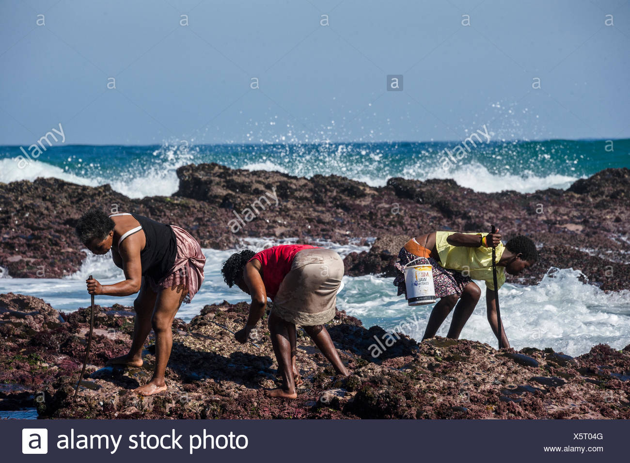 Subsistence fisherwomen harvest rocky shore organisms such as limpets and mussels from just outside the borders of the Dwesa-Cwebe Marine Protected Area. - Stock Image