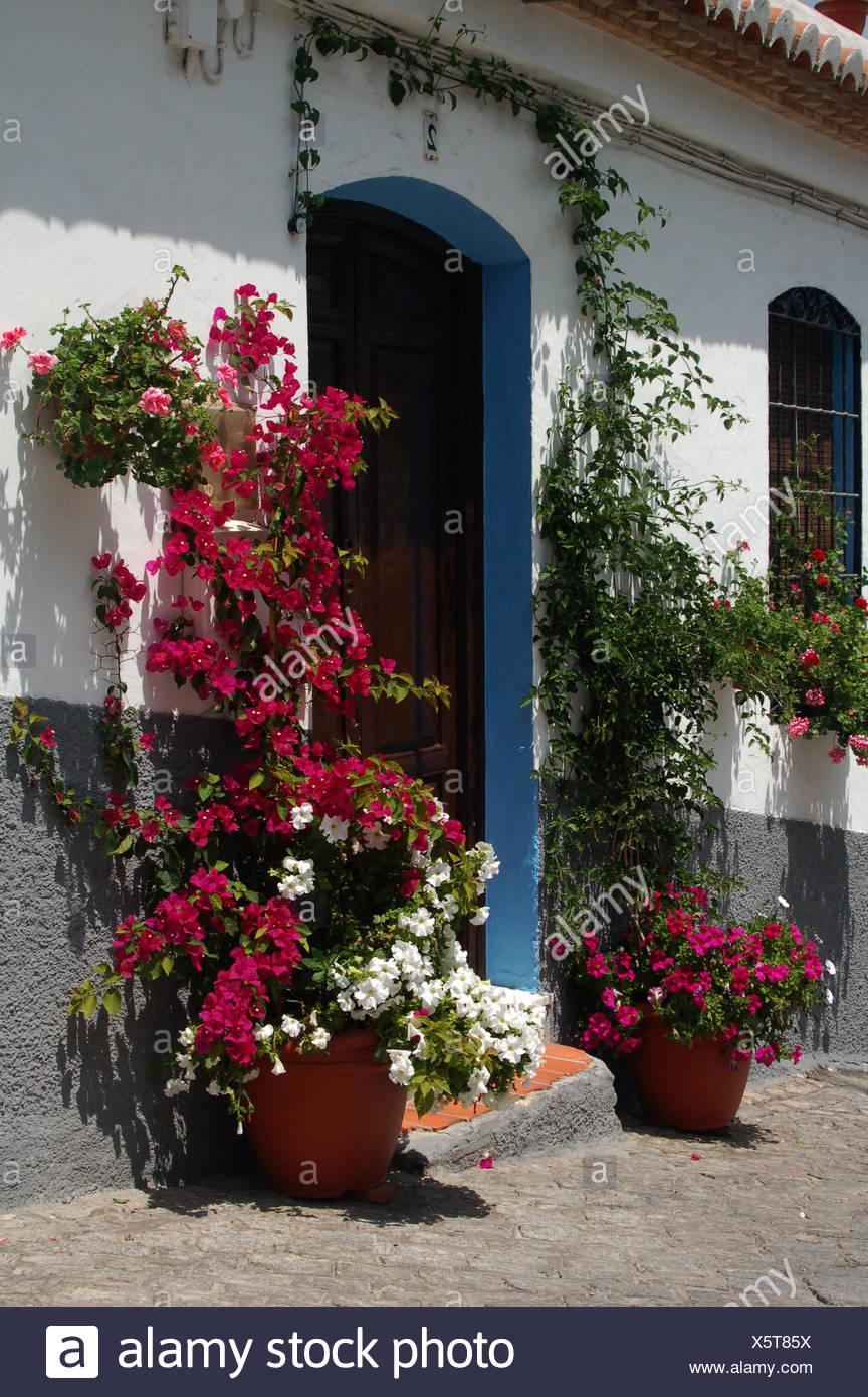 door front door eingangstr blumengeschmckte tr blaue tr topfpflanzen - Stock Image