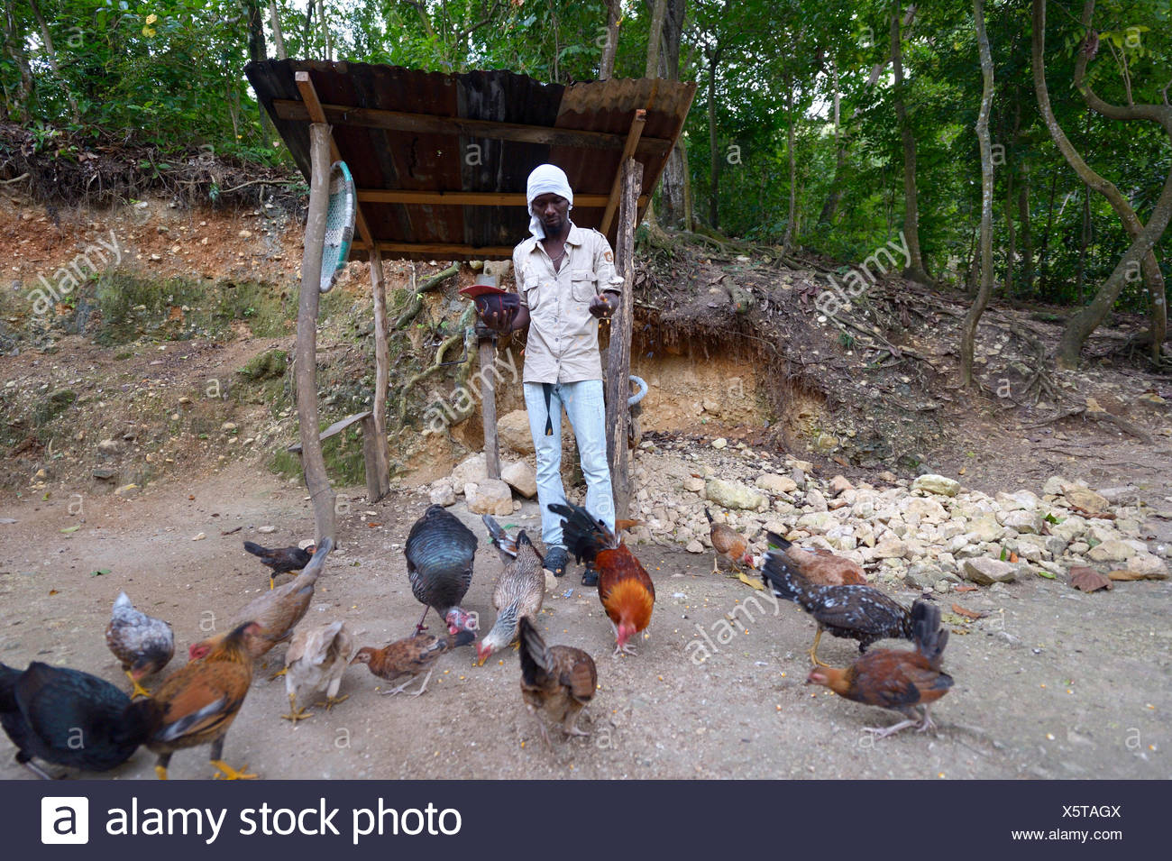 Man feeding his chickens, Riviere Froide, Ouest Department, Haiti Stock Photo