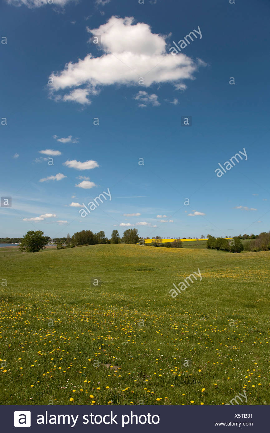 Spring in the Brodersby municipality, Angeln region, eastern down, Schleswig-Holstein, Germany, Europe - Stock Image