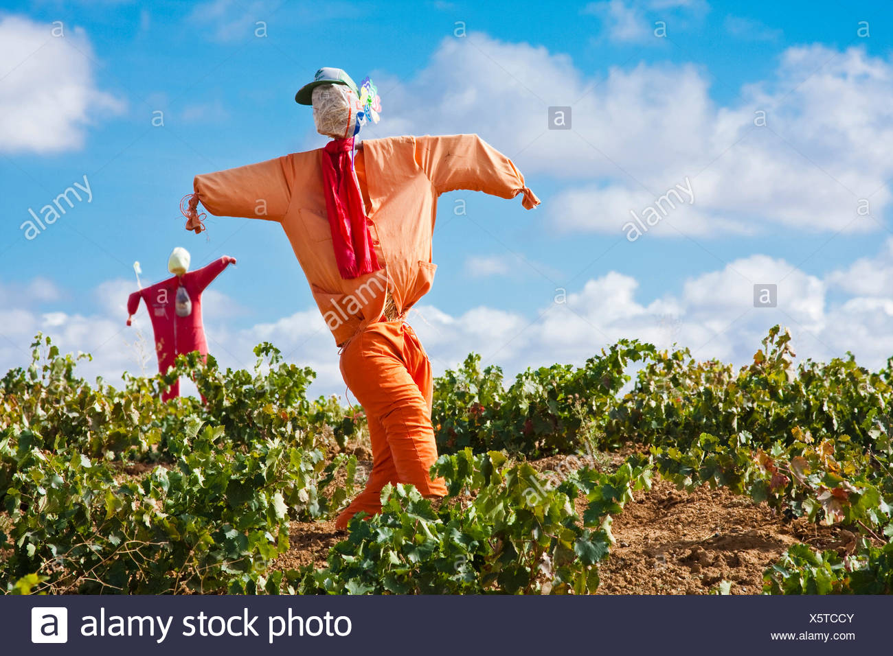 Way of St. James, two frumps in a  vineyard on the way from Moratinos to San Nicol�s del Real Camino, Spain, Kastilien und Leon, Provinz Pal, Palencia, Weg von Moratinos nach San Nicol - Stock Image