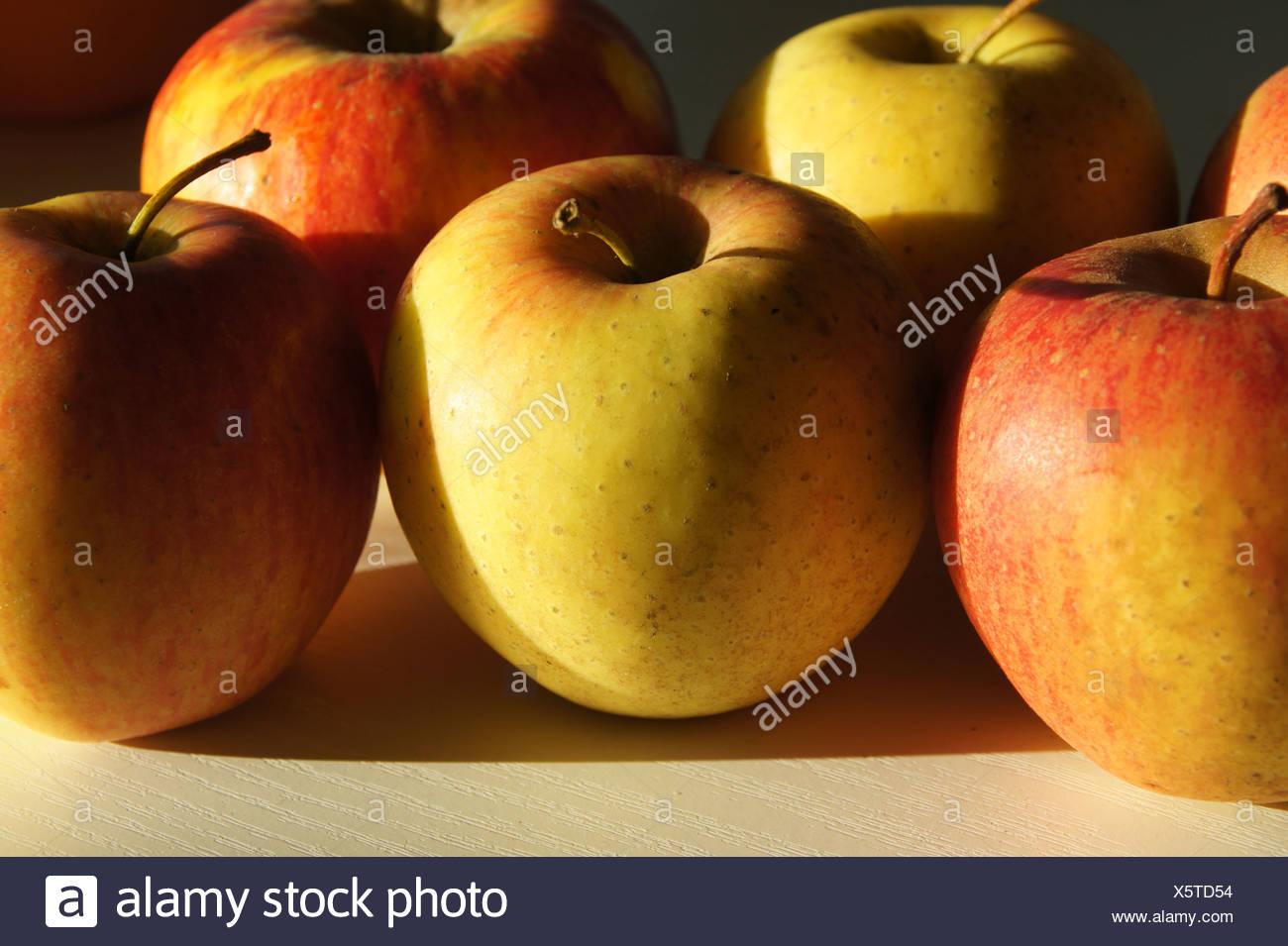 Apple-Sort Pinova - Stock Image