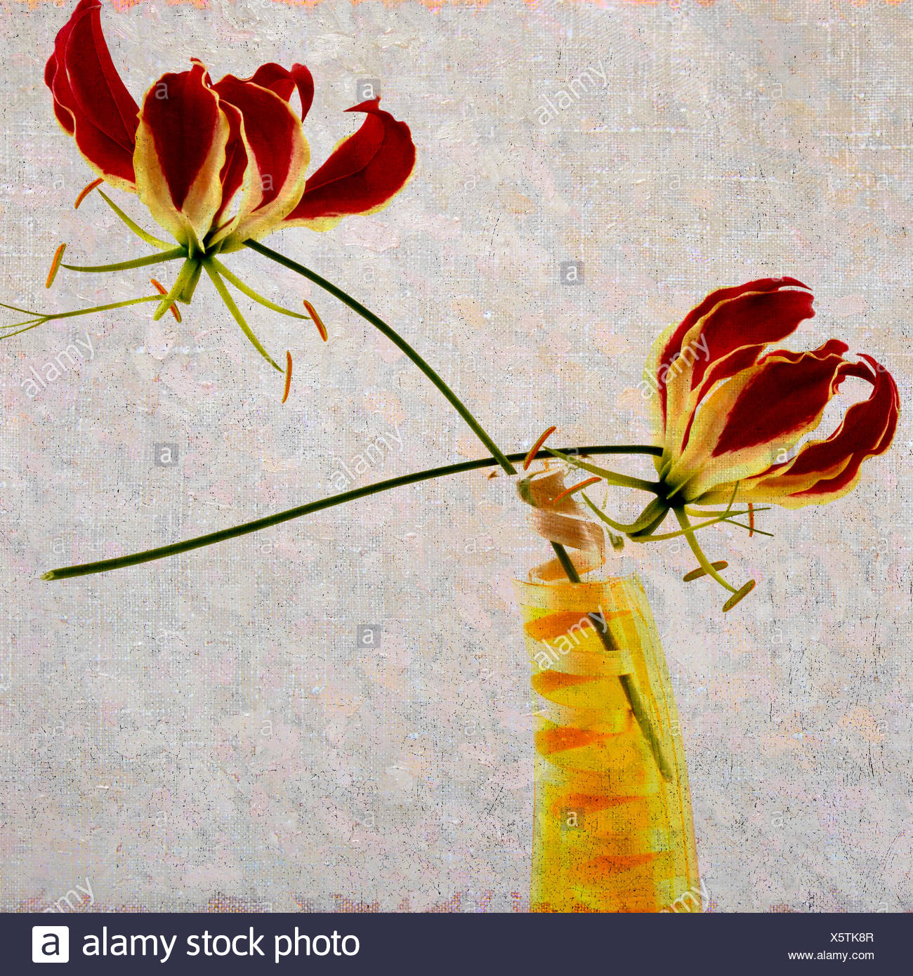 Red Lilies Flowers Stock Photos Red Lilies Flowers Stock Images