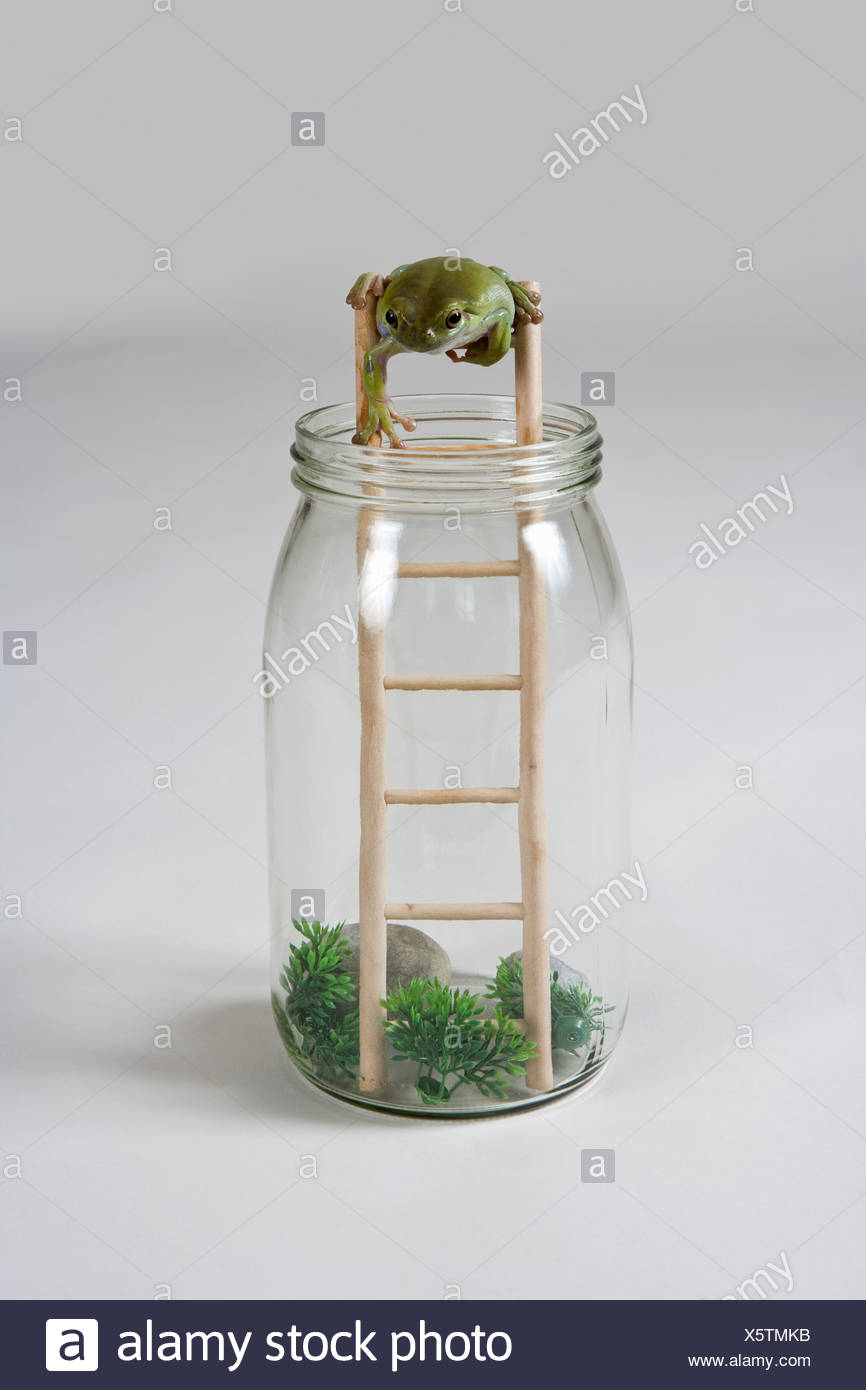 A frog climbing down a ladder - Stock Image