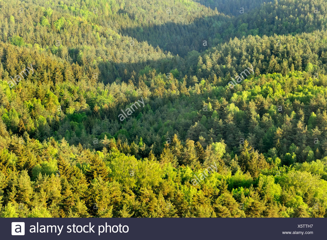 view of mixed forest in spring, Germany, Saxony, Saxon Switzerland National Park Stock Photo