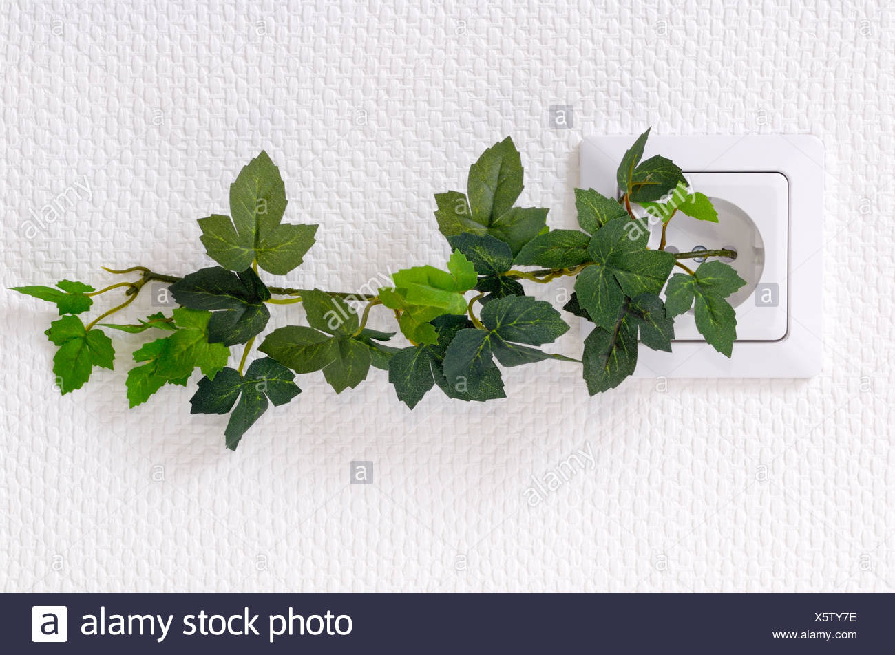 plant growing from - Stock Image